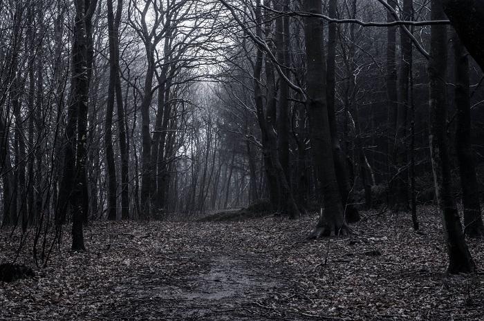 dark_woods_by_karskorg-d72jy3v