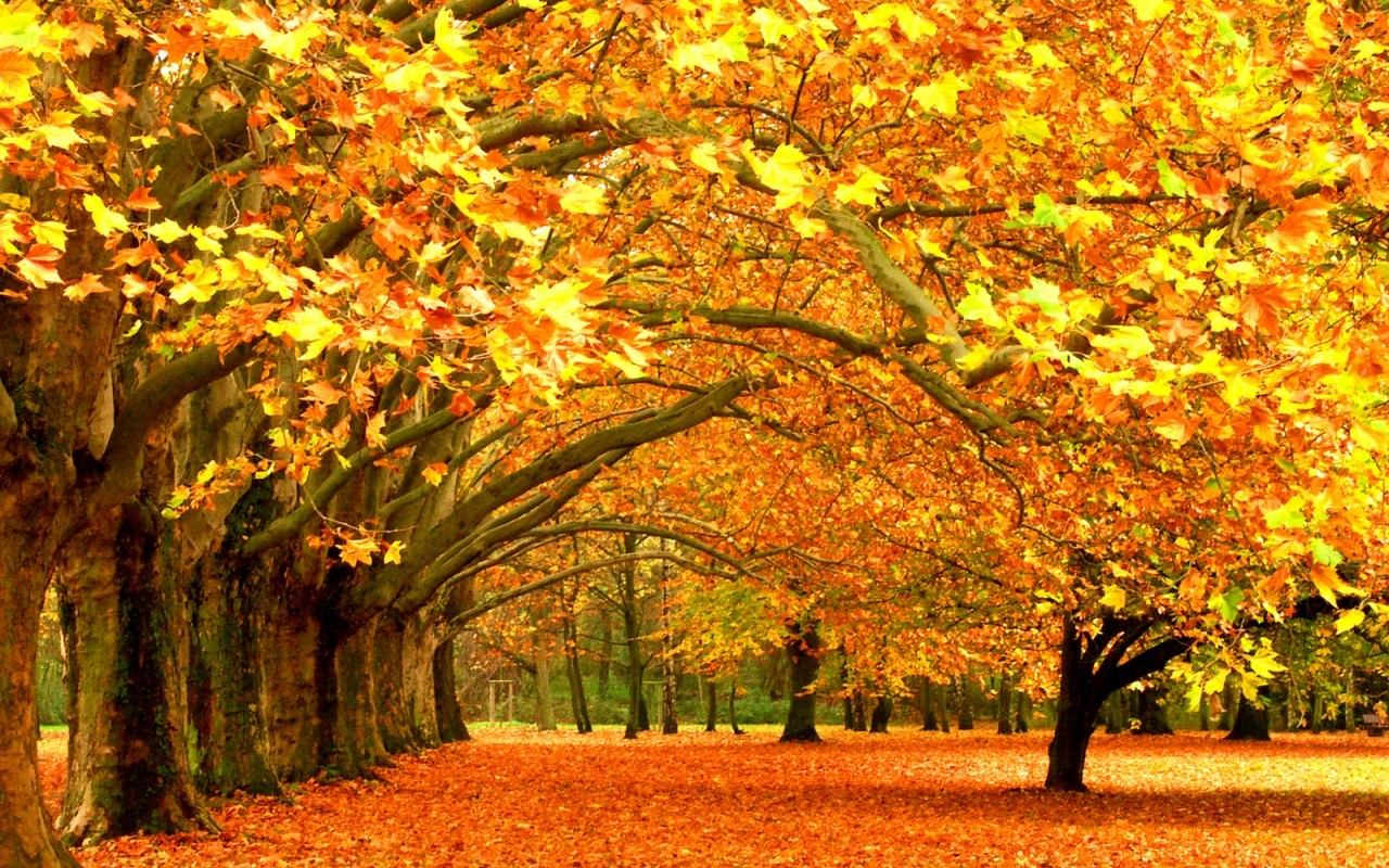 golden-autumn2